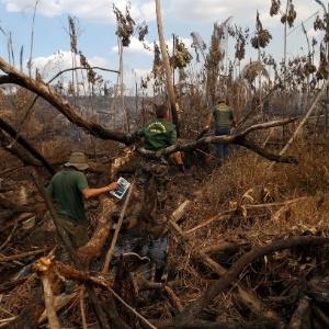Com queimada e desmatamento, pecuária ameaça a Amazônia