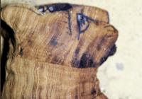 Divulgação/Ministério das Antiguidades do Egito