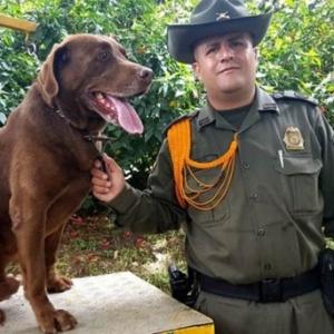 Traficantes colombianos oferecem US$ 990 pela morte de Choko