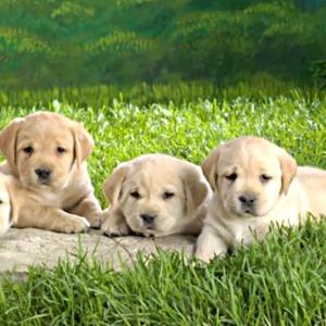 Reprodução/Canal Pet Shop